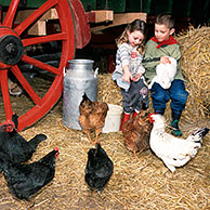 Children feeding chicken and rabbit in barn with red cartwheel and straw