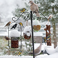 Songbirds feeding on nuts and fat from bird feeder during snow shower in winter