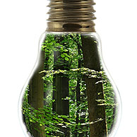 Trees in spring forest inside incandescent lamp / bulp against white background