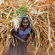 Black woman of the Konso / Xonsita tribe carrying huge bundle of dry maize stalks as animal fodder, south-western Ethiopia, Africa