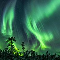 Northern Lights / Aurora borealis, weather phenomenon showing natural light display over Jokkmokk in winter, Norrbotten County, Lapland, Sweden