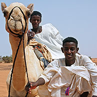 Boys with dromedary camel (Camelus dromedarius) near the pyramides of Meroe, Sudan, Africa