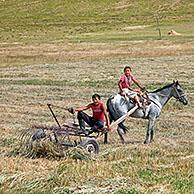 Two young Kyrgyz boys working with horse drawn hay rake in field, Osh Province, Kyrgyzstan