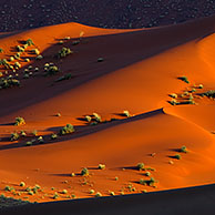 Red sand dunes of the Sossusvlei / Sossus Vlei in the Namib desert at sunset, Namibia