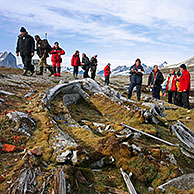 Tourists looking at old whale bones overgrown with moss in the Hornsund, Svalbard, Spitsbergen, Norway